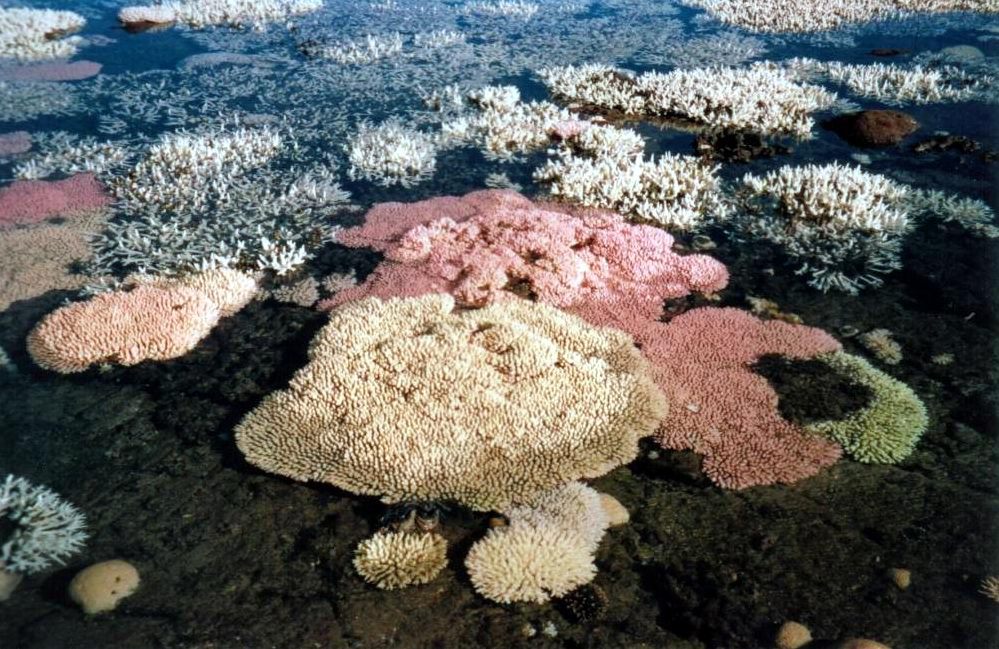 Bleached coral during low tide.