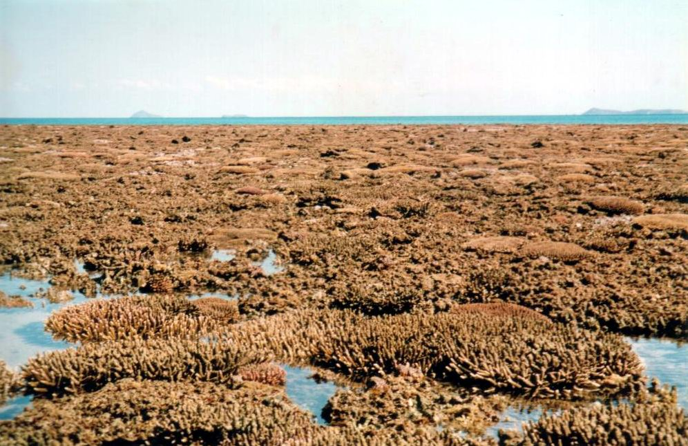 Healthy reef flat of Middle Island exposed during low tide.