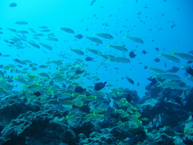 Reef at 25 m depth. Most sandy bottom, with areas of rock. Many reef fishes observed, coral reef biodiversity very low.