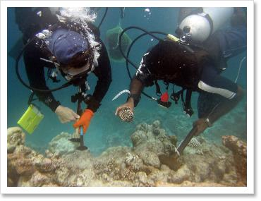 Dr. Andrew Baker of Wildlife Conservation Society, sampling candidates for a scientific coral bleaching experiment.