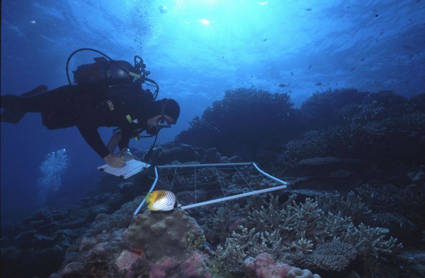 ARVAM scientist conducting quadrat measurement over branching Acropora