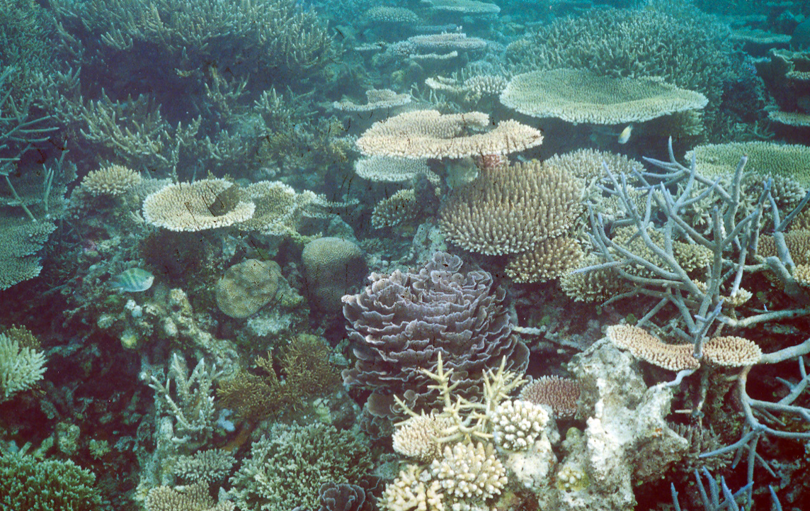 Healthy coral communities