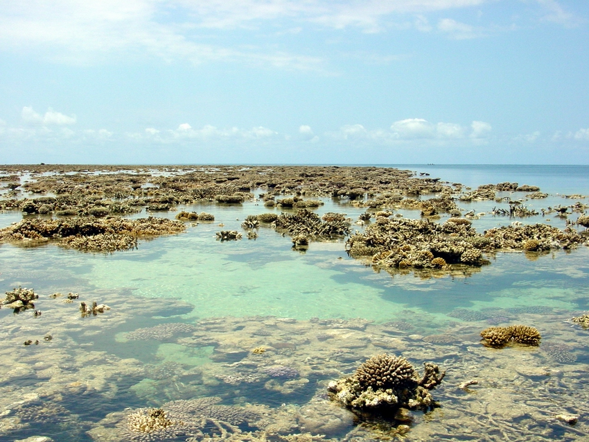 Reef flat exposed during low tide