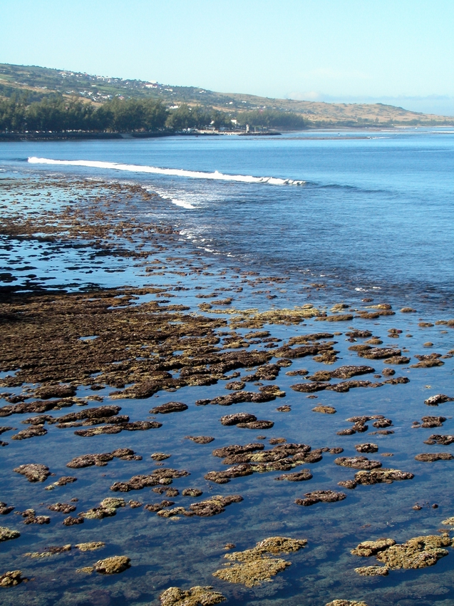 Reef flat exposed during low tides