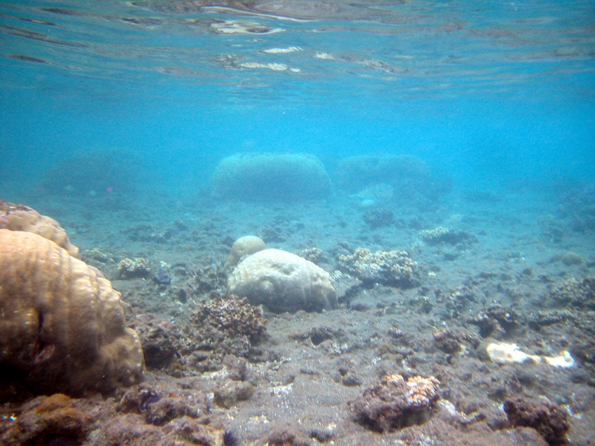 Degraded coral reef areas with heavy sedimentation