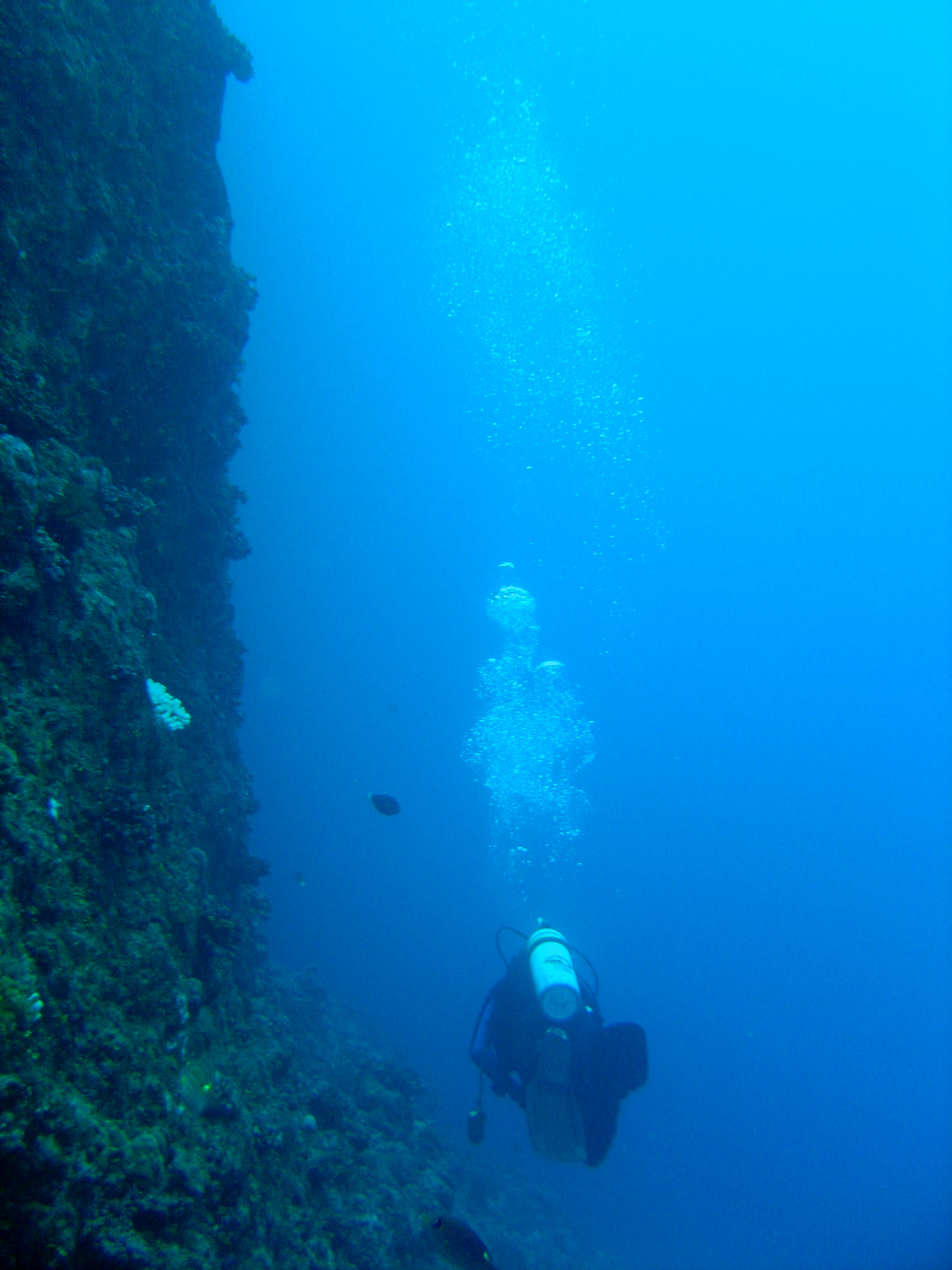Diver along wall outside the Grotto, a popular dive site on Saipan, CNMI