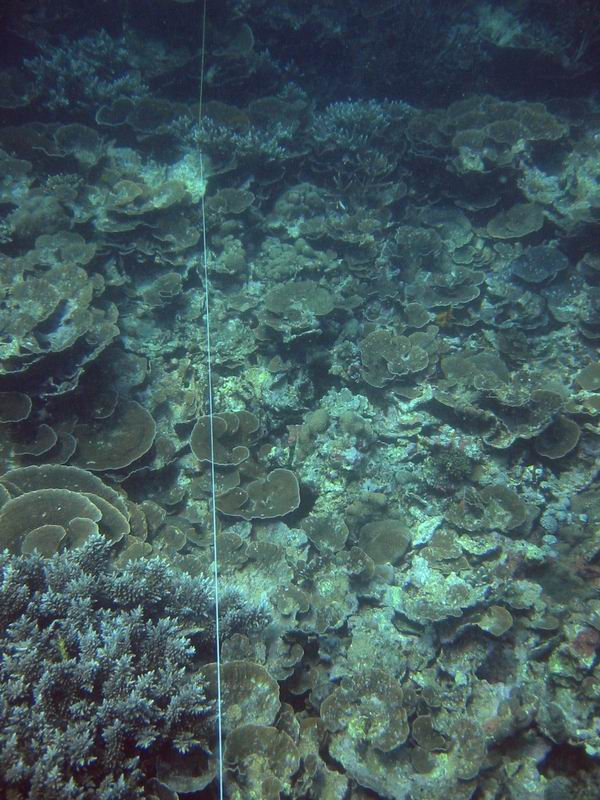 Reef Check transect line