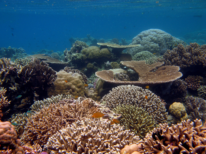 A glimpse into the coral gardens off Rau Island.