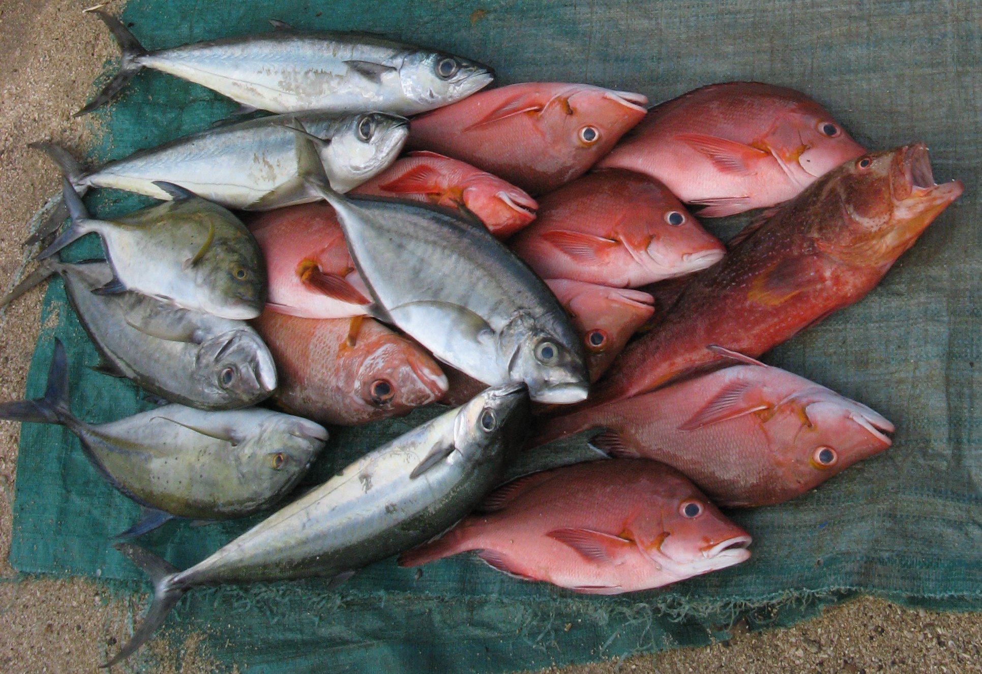 Reef fishes on sale in Gizo Market