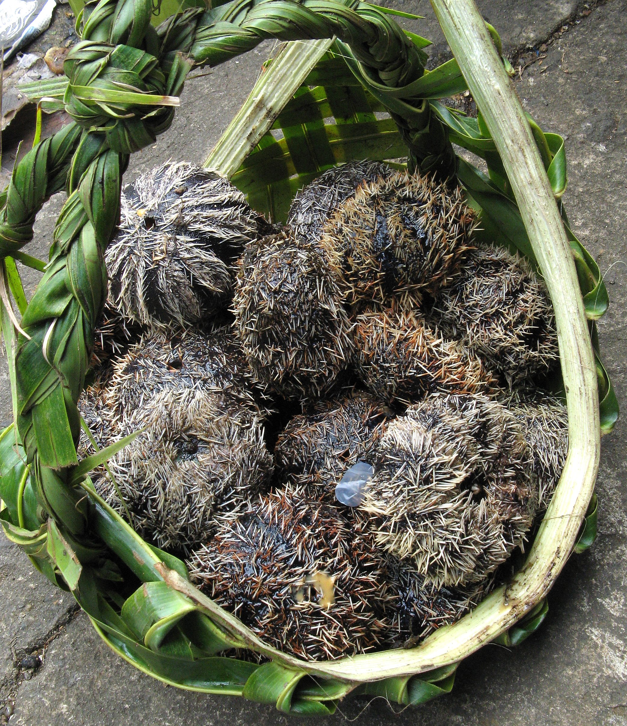 Harvested sea urchins sold in the market