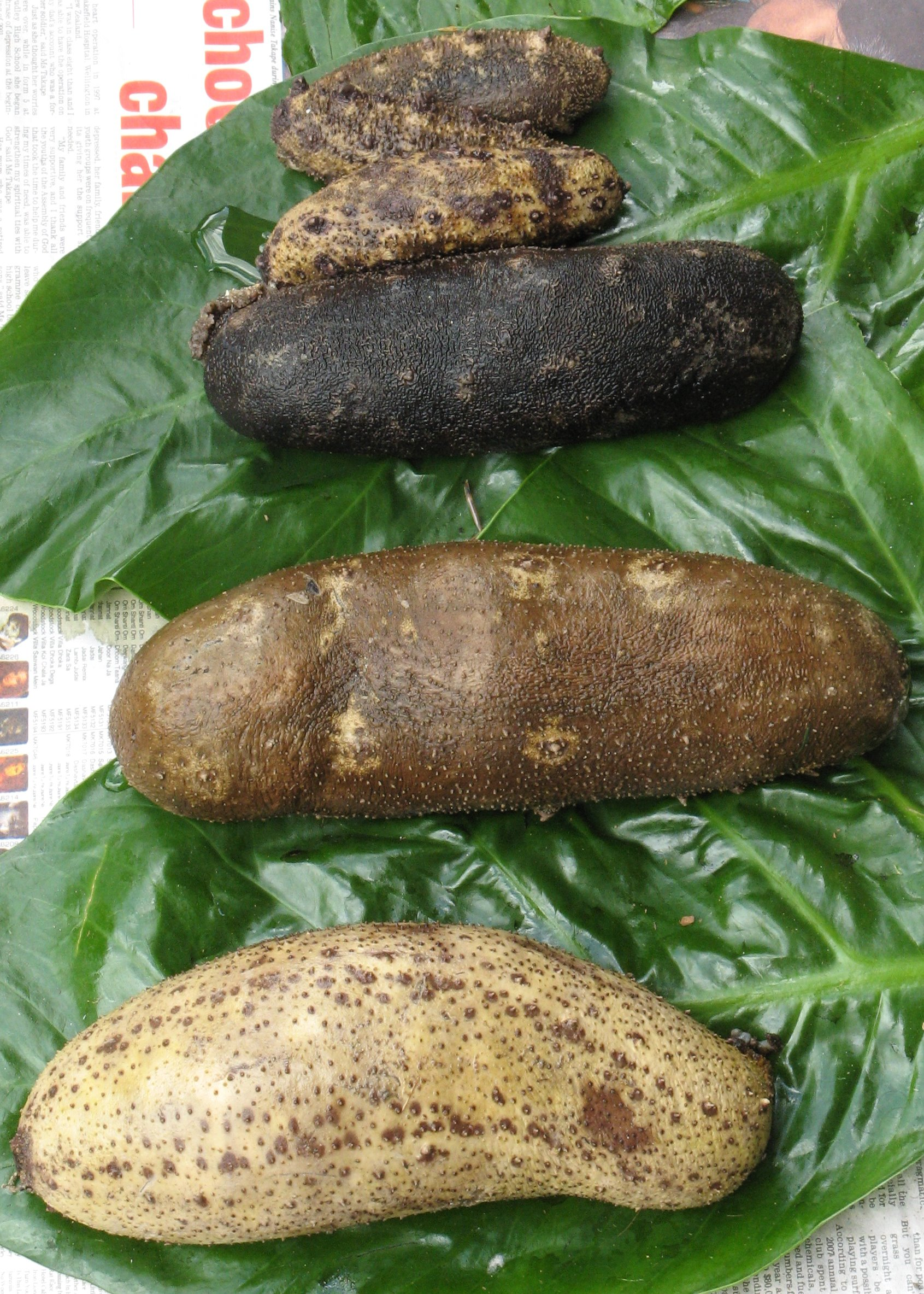 Sea cucumber (Holothurian sp.) on sale in local Suva market