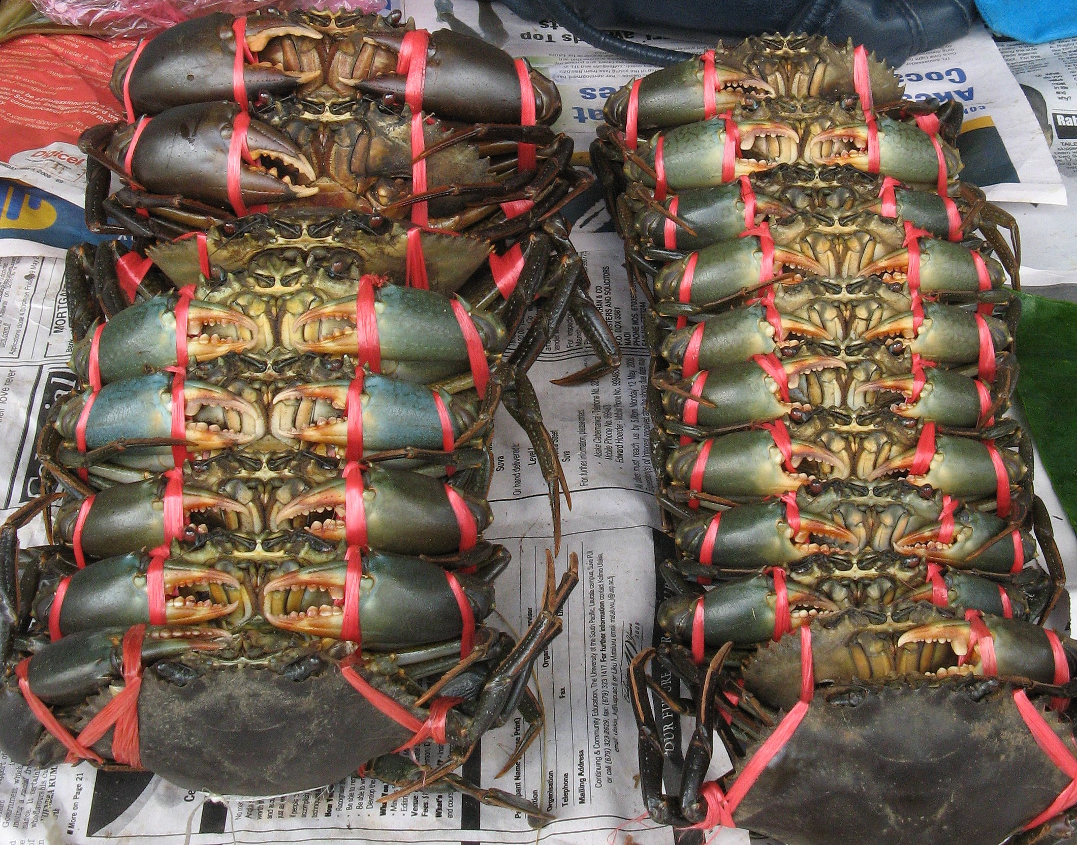 Mud crabs (Scylla sp.) on sale in Suva market