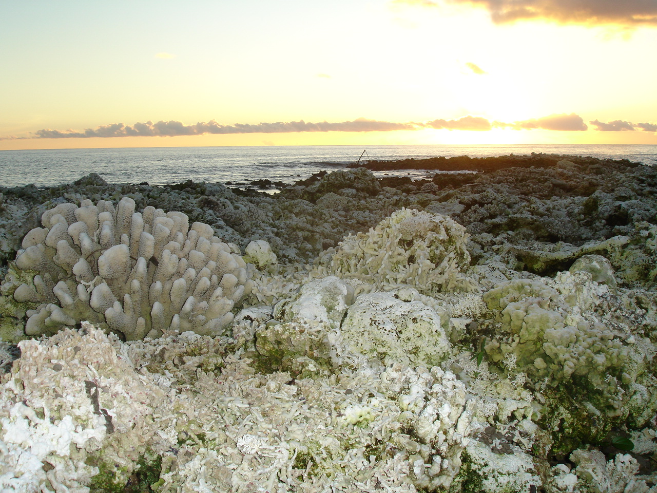 Uplifted reefs from 2 April 2007 earthquake