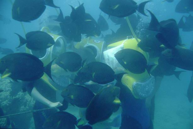 Underwater coral walk and surgeonfish
