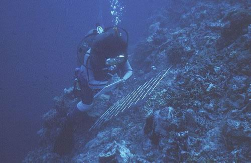 Sampling the reef slope with a quadrat.