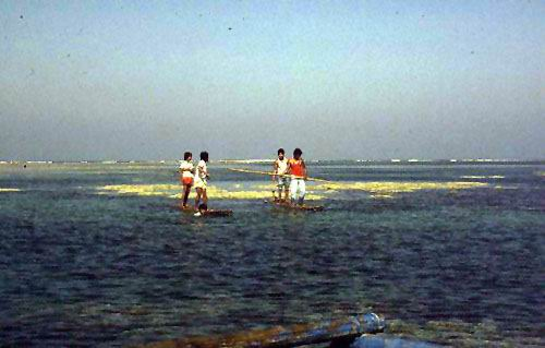 Bamboo rafts are used to transport fishers along the shallow reef flats.