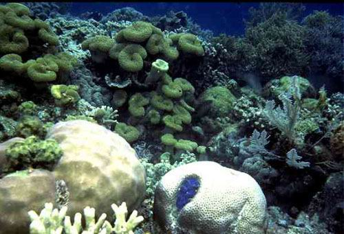 High cover dominated by soft coral species.