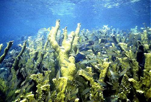 Overlapping coral branches provide refuge for a myriad of reef fish.