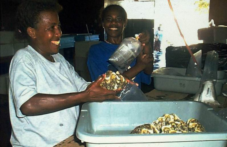 Packing giant clams for export