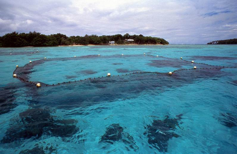 Giant clam exclosure and shoreline - 1 - N/T