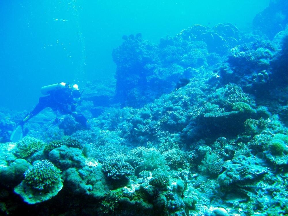 Laying transect for coral reef monitoring